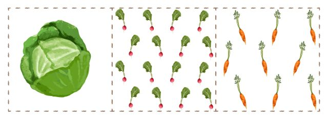 An illustration of how Peggy Slipp plants her vegetable seeds: one head of lettuce gets one square foot, sixteen radishes get another square foot, and nine carrots get another square foot.
