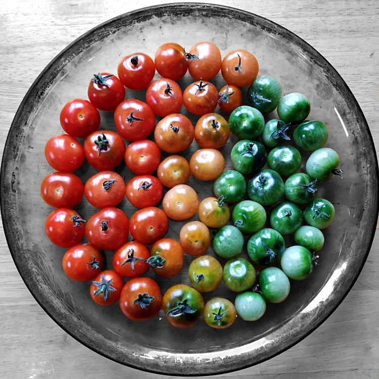 A glass bowl filled with cherry tomatoes that are organized by ripeness. There are red ones on the very left, then orange ones in the middle, and green ones on the right.